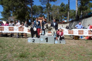 I Concurso Canino Banyeres de Mariola 2014