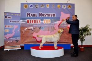 Mare_Nostrum (18)