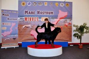 Mare_Nostrum (28)