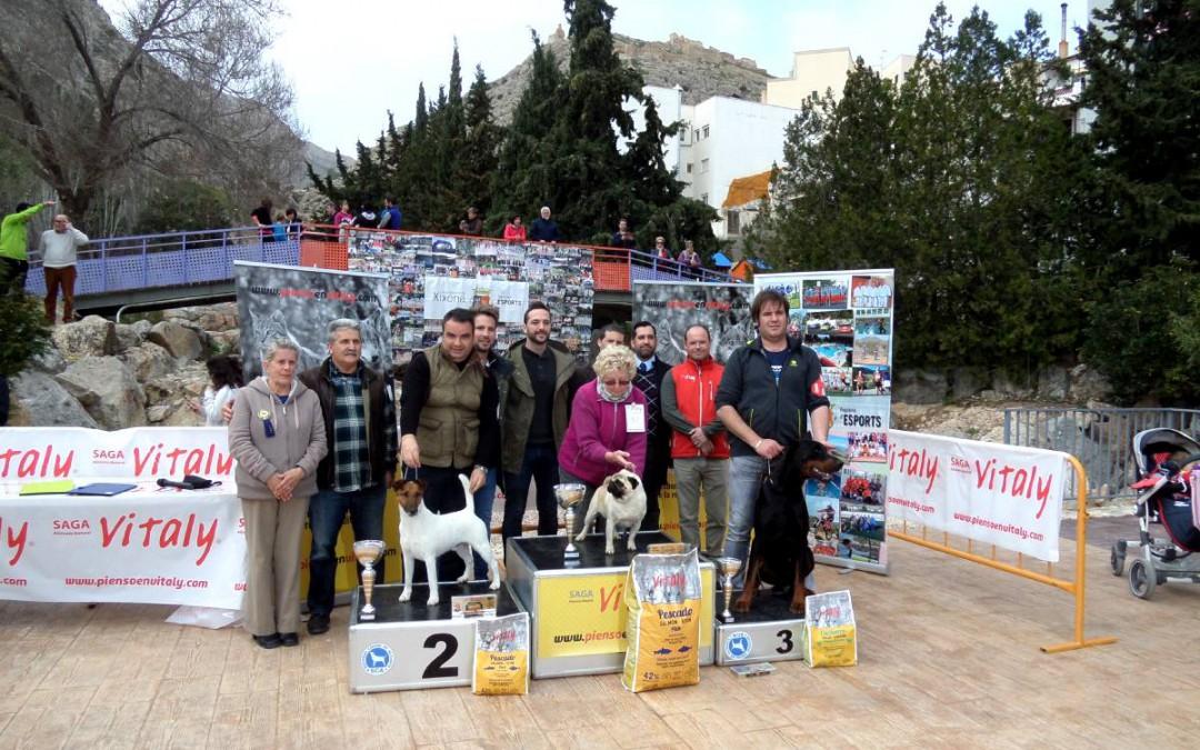 Fotos concurso Xixona 2017