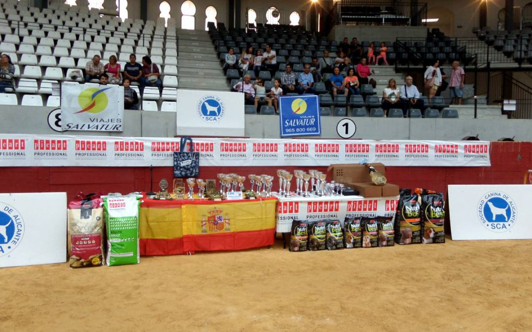Concurso Villena 2017