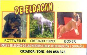 Socios-DeEldacan