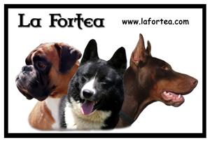 Socios-LaFortea