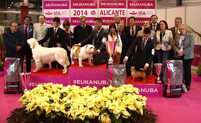 Resultados y fotos CAC y CACIB 2014