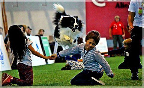 Ganadores II concurso fotografía Sociedad canina de Alicante