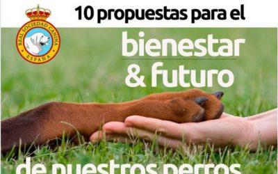 10 propuestas para el bienestar y futuro de nuestros perros