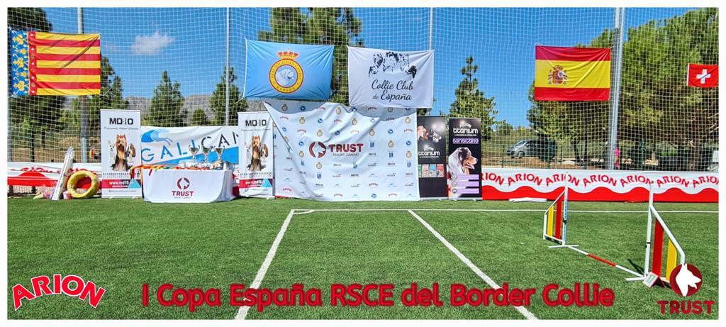 I copa de España RSCE del Border collie
